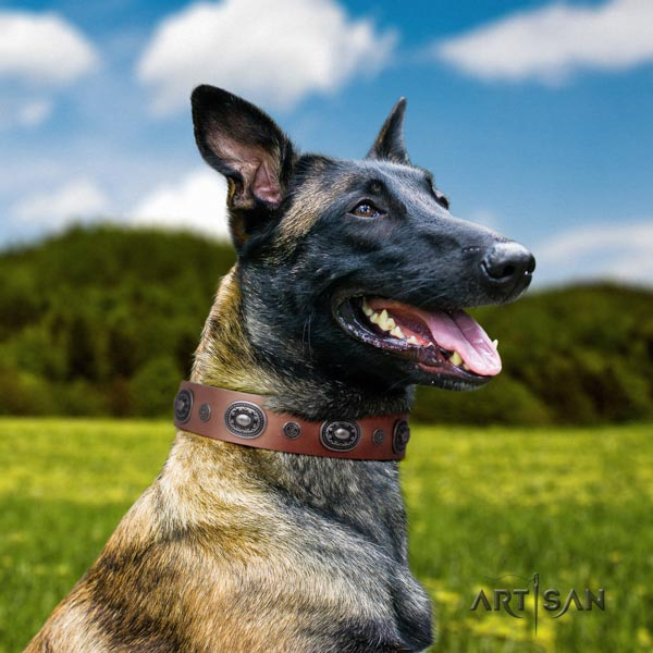 Belgian Malinois daily walking full grain natural leather collar for your handsome doggie