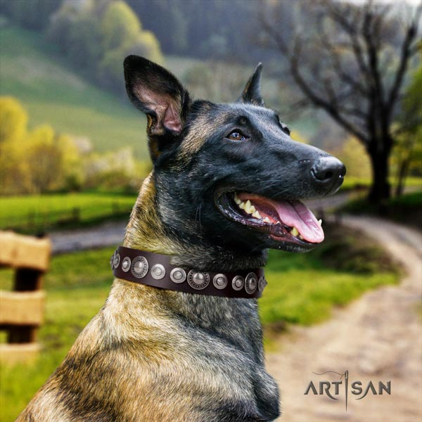 Belgian Malinois walking full grain leather collar for your impressive canine