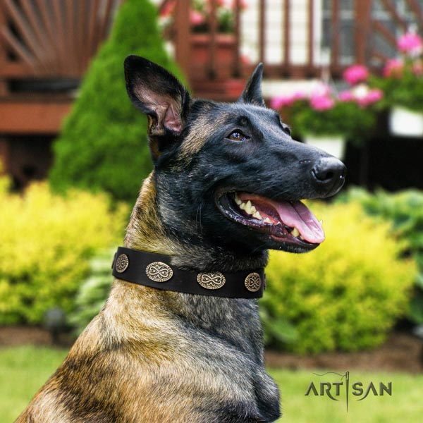 Belgian Malinois daily use full grain natural leather collar for your attractive dog