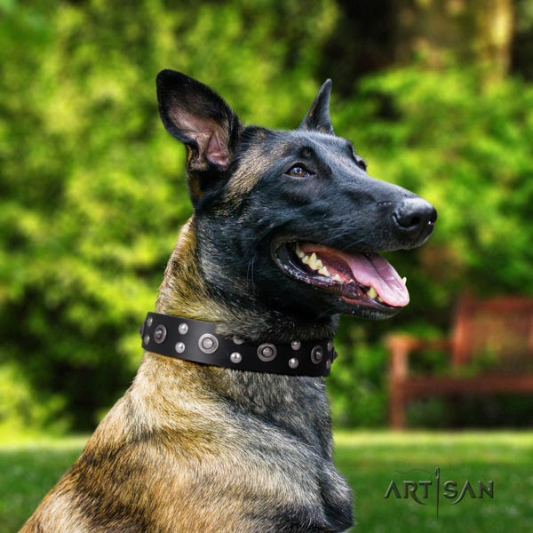 Belgian Malinois everyday use full grain leather collar for your impressive doggie
