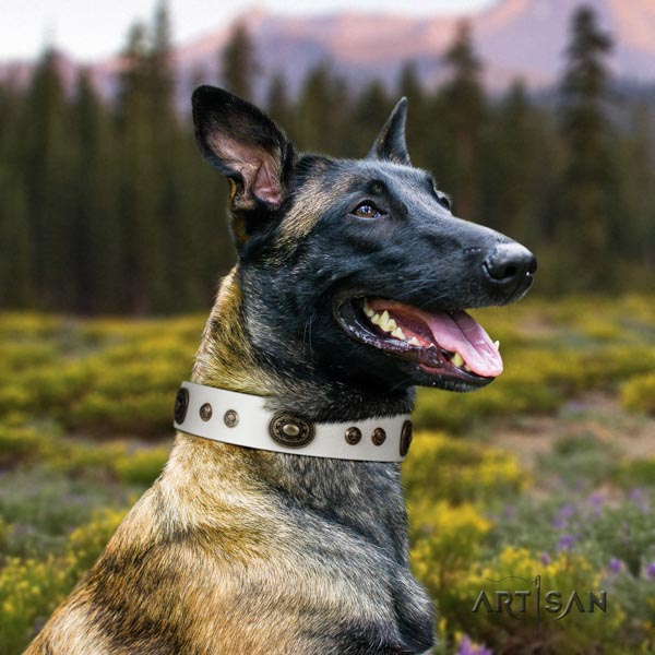 Belgian Malinois daily walking genuine leather collar for your attractive pet