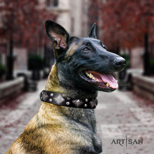 Belgian Malinois comfy wearing natural leather collar for your lovely doggie