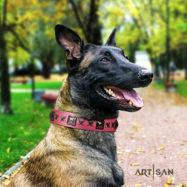 Belgian Malinois comfortable wearing natural leather collar for your lovely four-legged friend