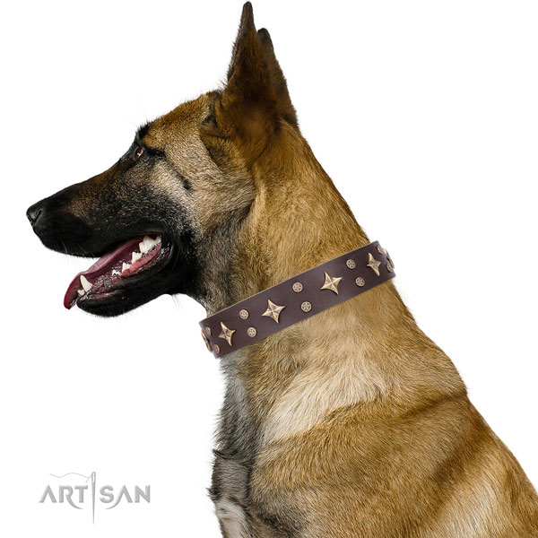 Belgian Malinois designer full grain leather dog collar for walking