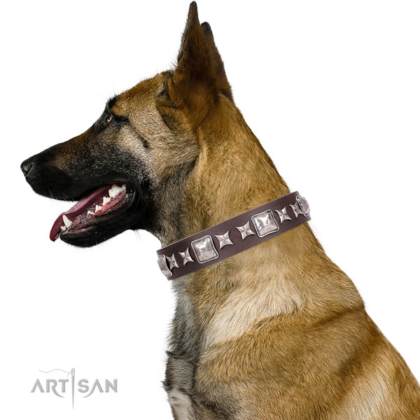 Belgian Malinois stylish design leather dog collar for daily walking