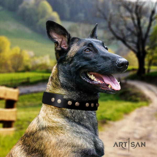 Belgian Malinois daily use natural leather collar for your attractive canine
