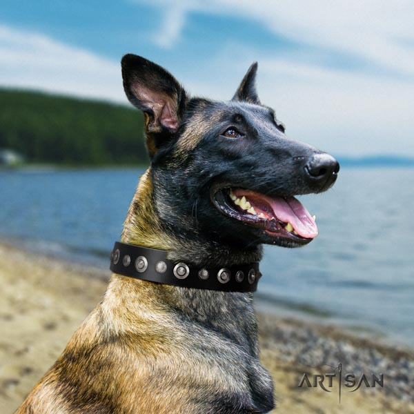 Belgian Malinois everyday walking full grain genuine leather collar for your stylish dog