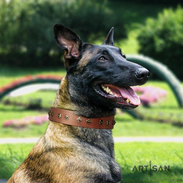 Belgian Malinois handy use full grain leather collar for your attractive four-legged friend