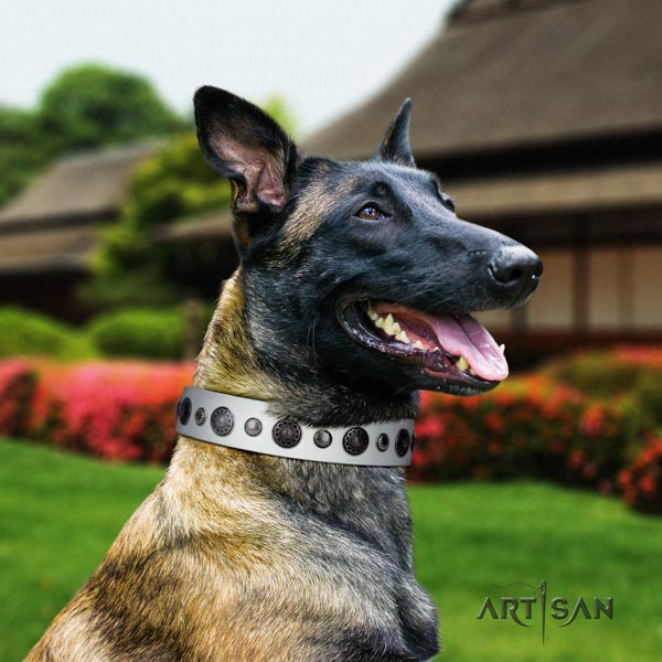 Belgian Malinois stylish walking full grain genuine leather collar for your impressive dog