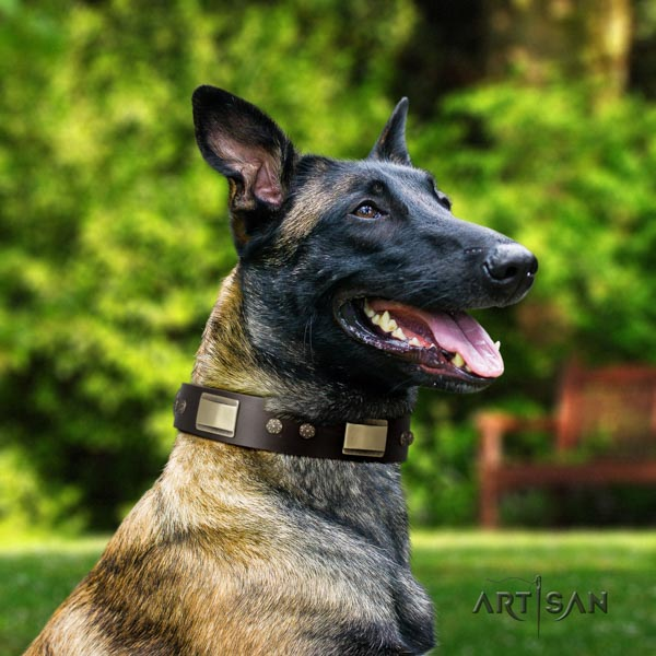 Belgian Malinois everyday walking full grain natural leather collar for your handsome dog