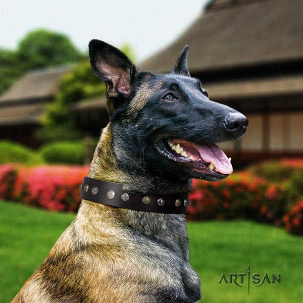 Belgian Malinois daily walking full grain genuine leather collar for your lovely dog