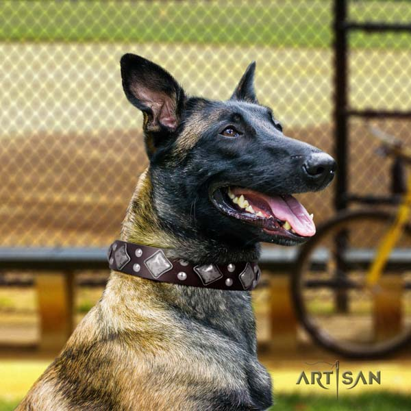 Belgian Malinois daily walking full grain genuine leather collar for your attractive four-legged friend