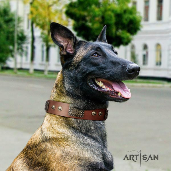 Belgian Malinois comfy wearing natural leather collar for your beautiful canine