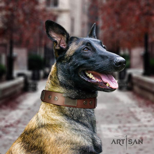 Belgian Malinois daily walking full grain genuine leather collar for your lovely canine