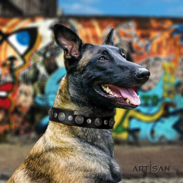 Belgian Malinois comfy wearing full grain natural leather collar for your attractive pet