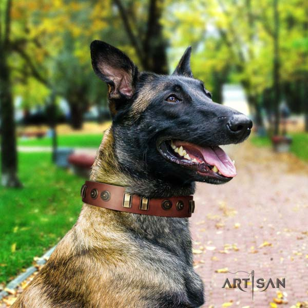 Belgian Malinois daily use natural leather collar for your handsome doggie