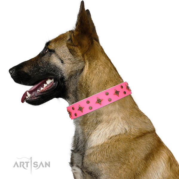 Belgian Malinois fashionable full grain leather dog collar for everyday use