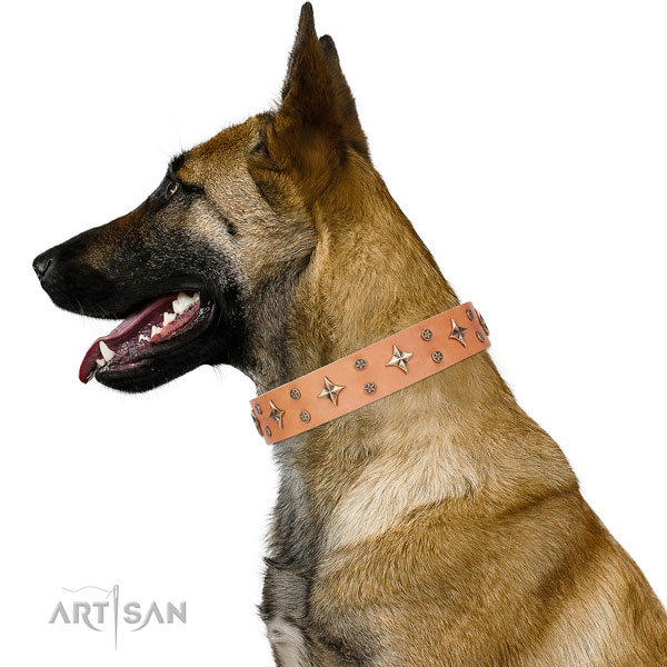Belgian Malinois embellished natural genuine leather dog collar for stylish walking