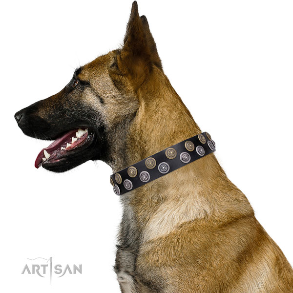 Belgian Malinois studded full grain natural leather dog collar for everyday walking