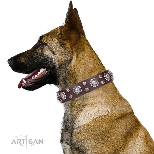 Belgian Malinois handmade leather dog collar for daily walking