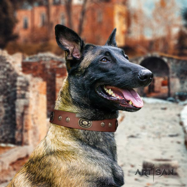 Belgian Malinois daily walking full grain natural leather collar for your attractive pet