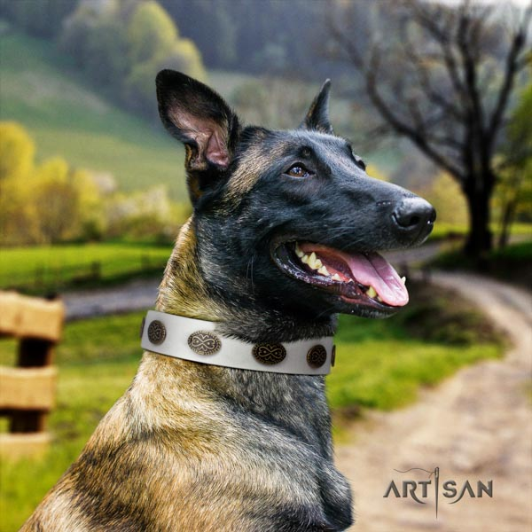 Belgian Malinois walking genuine leather collar for your attractive four-legged friend