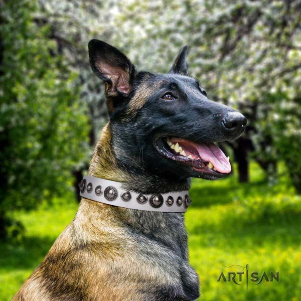 Belgian Malinois handy use full grain genuine leather collar for your stylish doggie