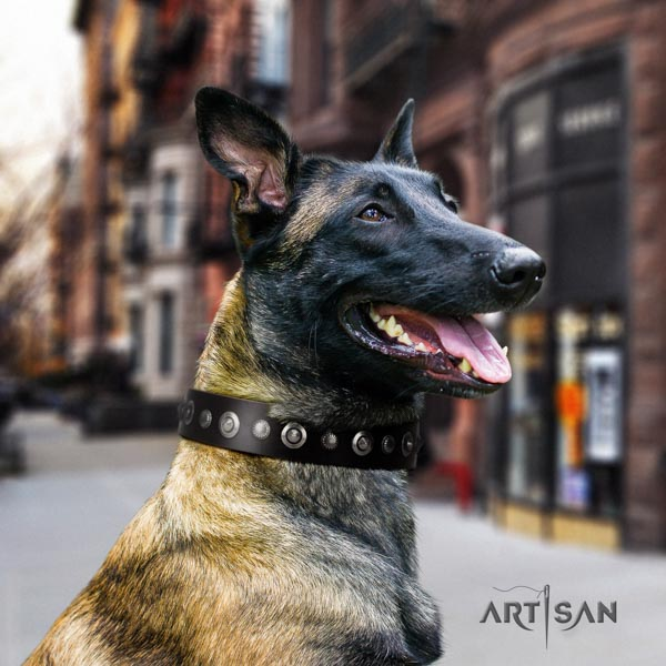 Belgian Malinois handy use genuine leather collar for your handsome canine