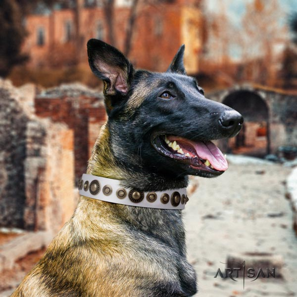 Belgian Malinois fancy walking full grain genuine leather collar for your impressive four-legged friend