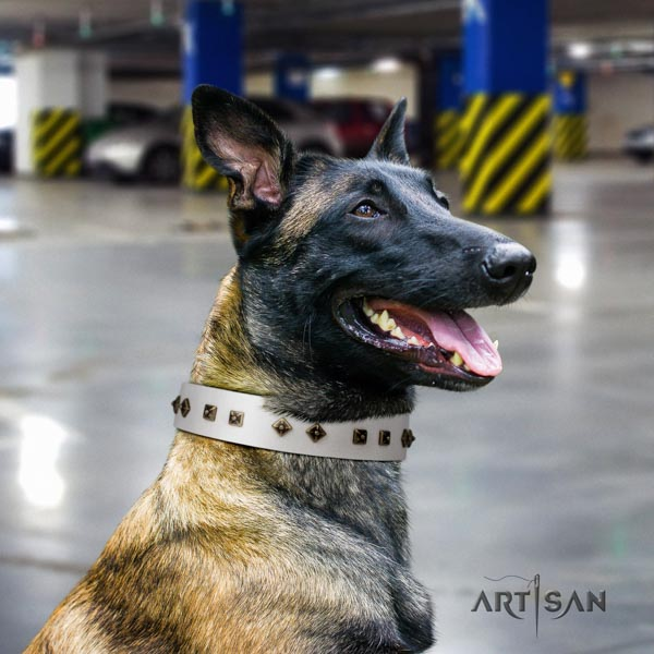 Belgian Malinois daily walking full grain leather collar for your impressive doggie