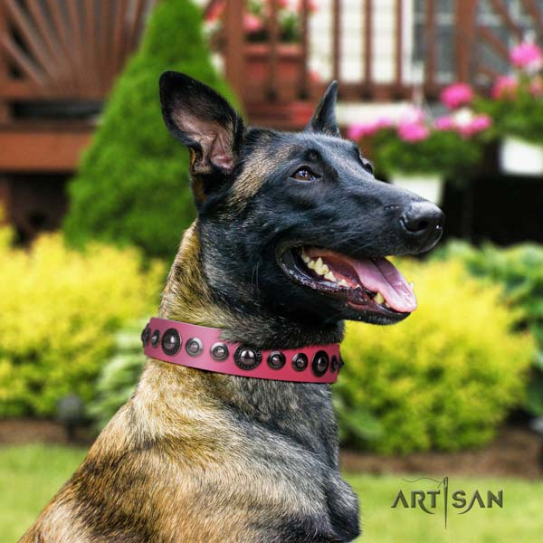 Belgian Malinois comfy wearing full grain natural leather collar for your handsome canine