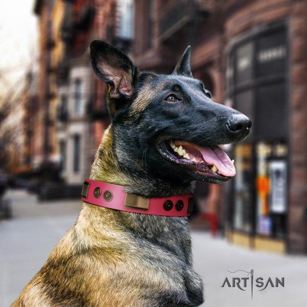 Belgian Malinois comfortable wearing natural leather collar for your lovely canine