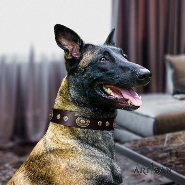 Belgian Malinois comfortable wearing natural leather collar for your beautiful doggie