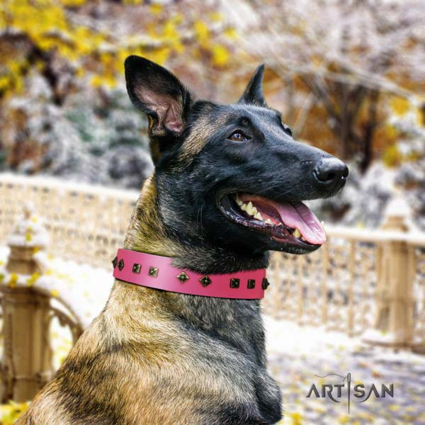 Belgian Malinois daily use genuine leather collar for your handsome pet