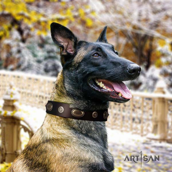 Belgian Malinois everyday use natural leather collar for your attractive dog
