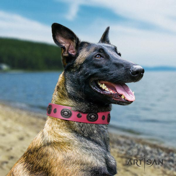 Belgian Malinois comfortable wearing full grain genuine leather collar for your impressive canine