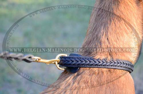 Braided walking Belgian Malinois leather collar