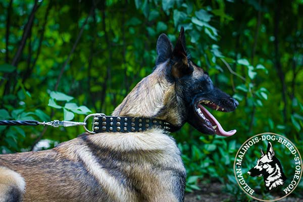 Belgian Malinois black leather collar of classy design with handset decoration for walking in style