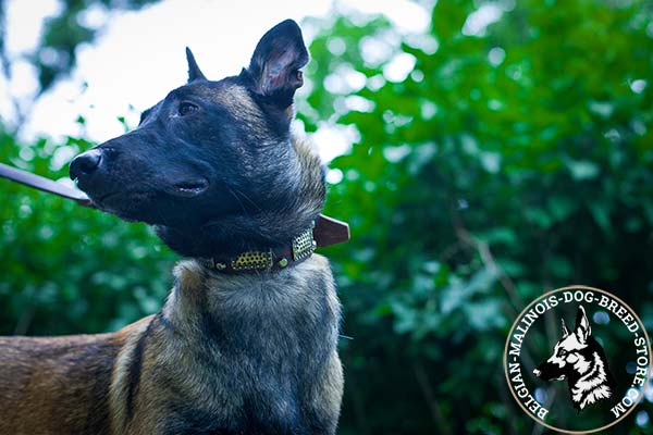 Belgian Malinois brown leather muzzle for snug fit with handset adornment for safe walking