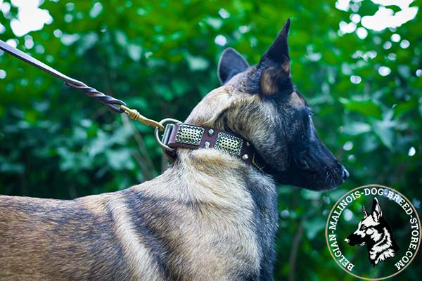 Belgian Malinois brown leather muzzle with elegant decorated with studs and plates for walking
