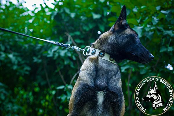 Belgian Malinois white leather collar of classy design with handset plates for better comfort