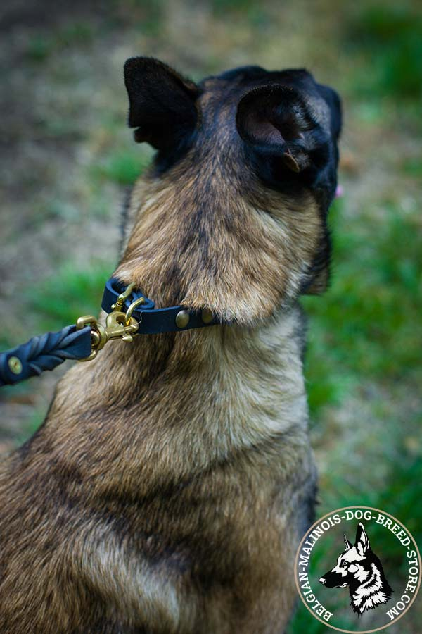 Belgian Malinois black leather collar of braided design decorated with half-balls for daily walks