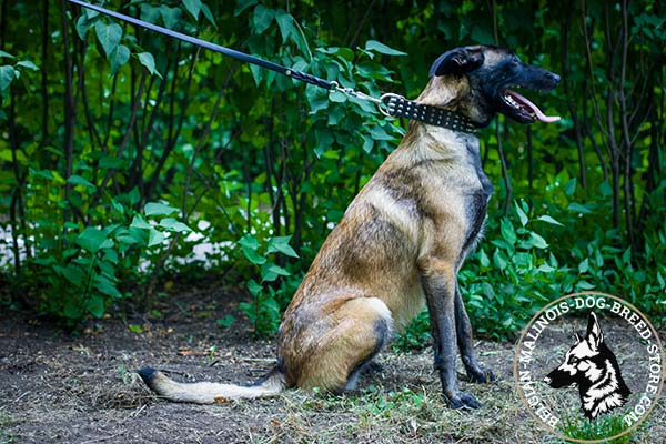 Belgian Malinois leather collar with elegant with handset half-balls and spikes for daily walks