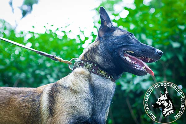 Belgian Malinois brown leather muzzle of classy design adorned with studs and plates for daily activity