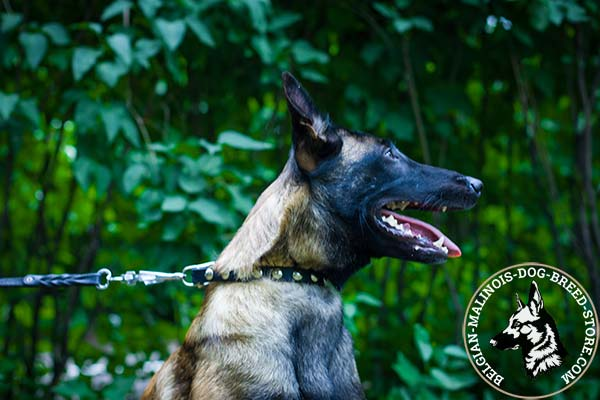 Belgian Malinois black leather collar of classy design adorned with half-balls for walking