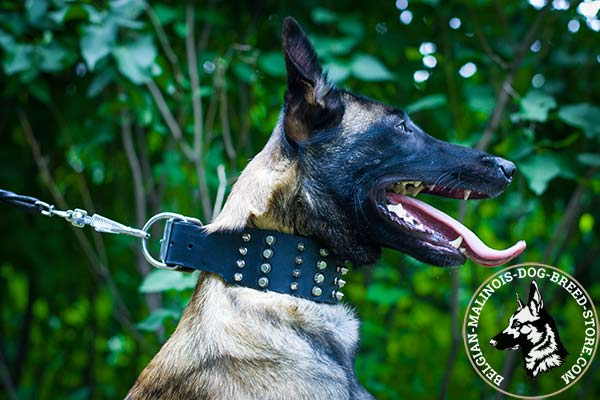 Belgian Malinois black leather collar extra wide with traditional buckle for utmost comfort