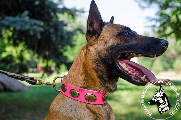 Belgian Malinois pink leather collar adjustable  with plates for stylish walks