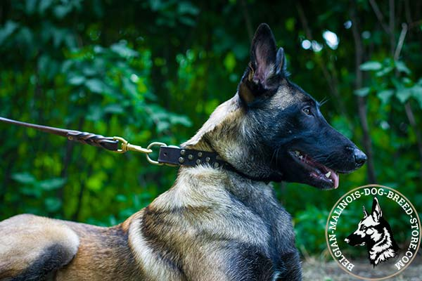 Belgian Malinois brown leather collar of high quality with brass plated hardware for daily activity