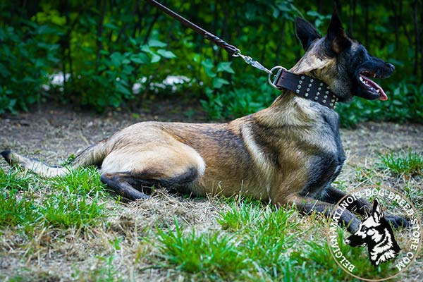 Belgian Malinois brown leather collar wide with handset decoration for utmost comfort
