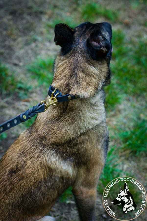 Belgian Malinois black leather collar of genuine materials adorned with half-balls for stylish walks